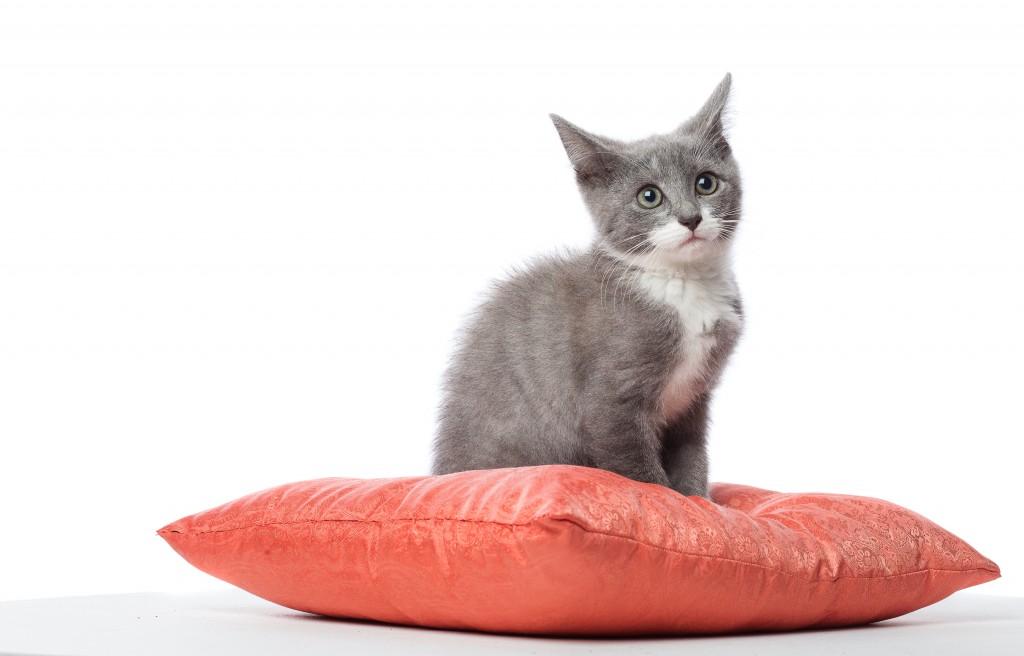 cat-cost