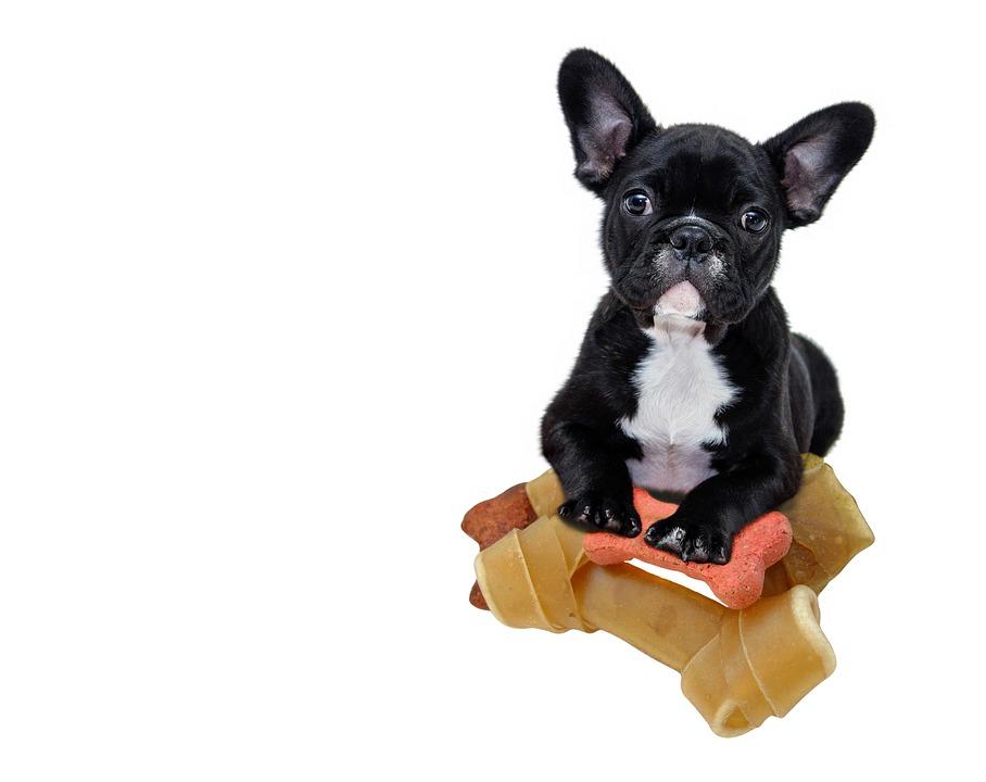 dog food cost